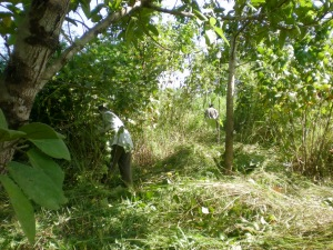 Clearing the undergrowth
