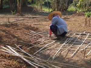 Preparing the bamboo trellis.
