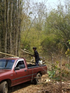 Loading the bamboo onto my trusty truck.