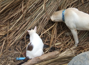 Toni and Sophia check out the newly arrived thatch.