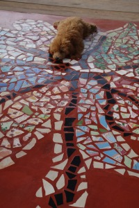 Lucy snoozing on the cool mosaic floor of the Sala.  Thanks Luz for these photos.